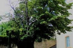 BALLADE À GORDES ET À L'ABBAYE NOTRE-DAME DE SÉNANQUES (84) LE 04/07/2021